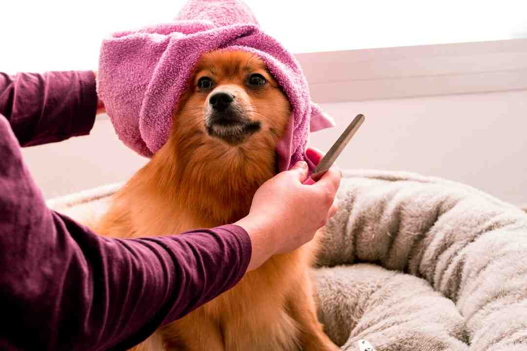 Comment devenir toiletteur pour chiens