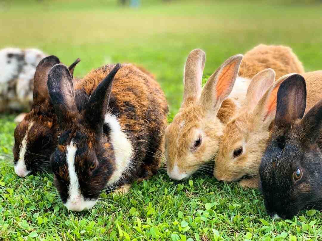 Qu'est-ce que les lapins détestent ?